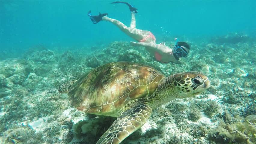 Beautiful take of a white girl in a bikini snorkeling wit a sea turtle snow motion shot.