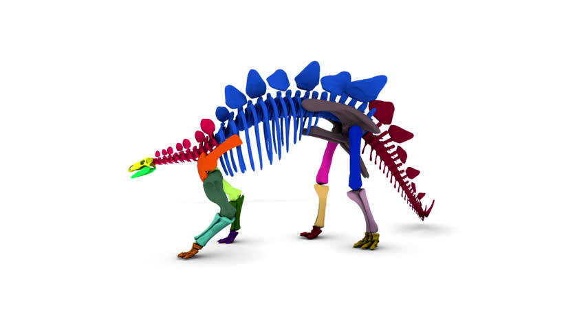 Stegosaurus Skeleton Rotating