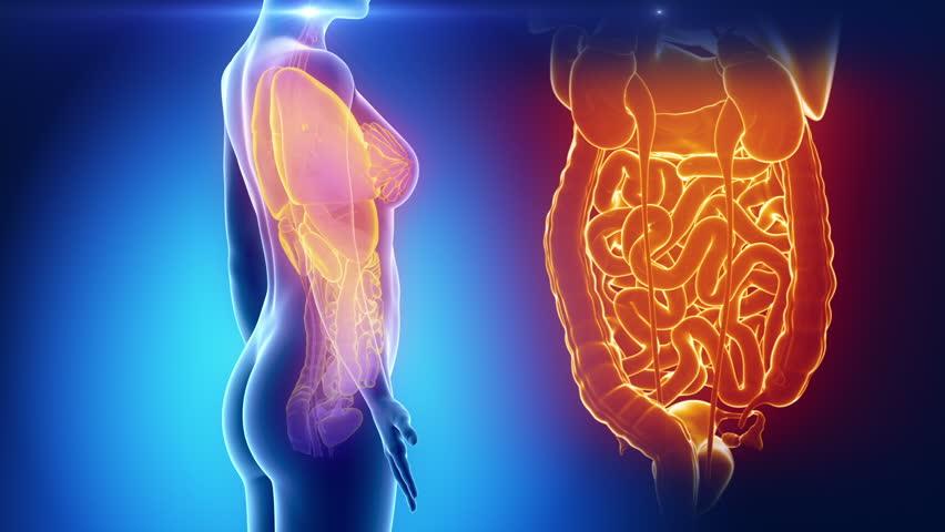 Female Organs Anatomy In Blue Stock Footage Video 100 Royalty Free
