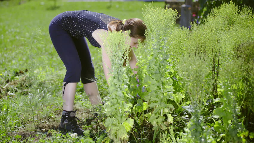 how to prepare overgrown garden for planting