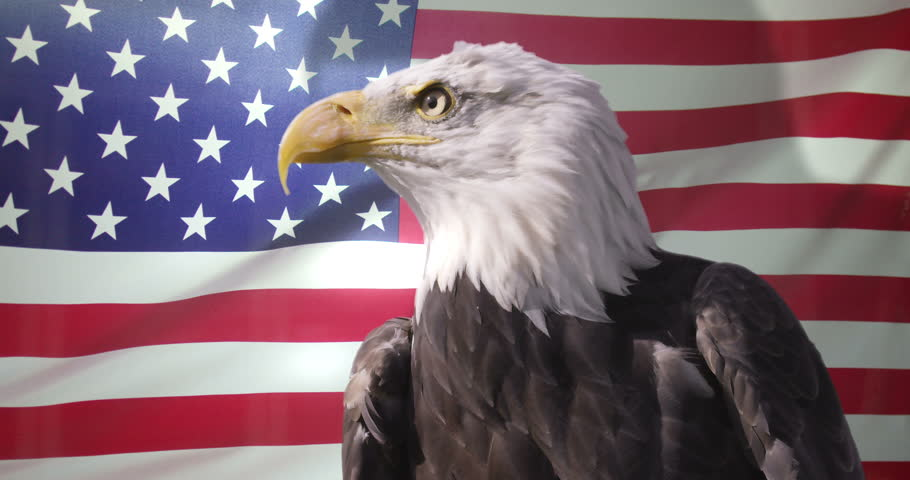 4k Close Up Of American Stock Footage Video 100 Royalty Free