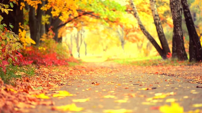 Autumn Park Background Fall Beautiful Stock Footage