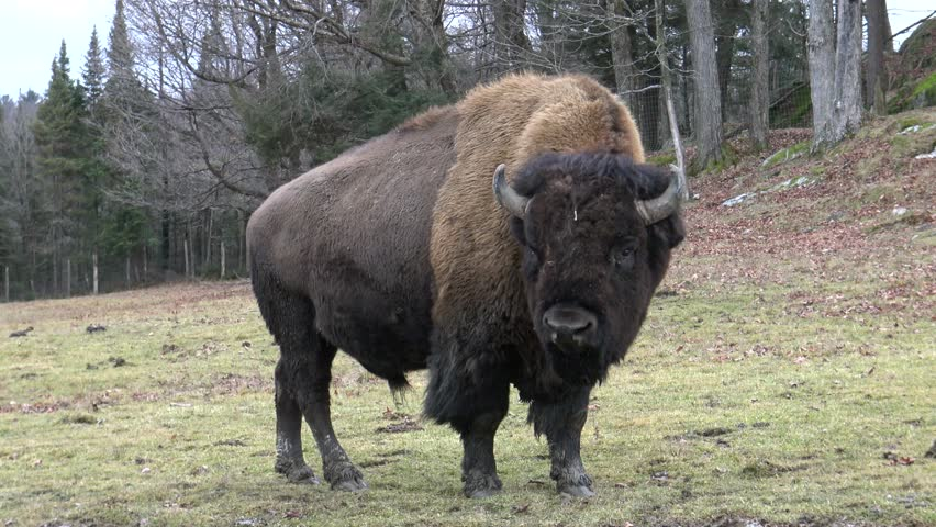 free online personals in buffalo prairie Project buffalo commons is the attempt to turn back the demographics and history of the american west to the time before the settlement fences should be torn down to allow hundreds of thousands of buffalos to roam freely across the vast plains.