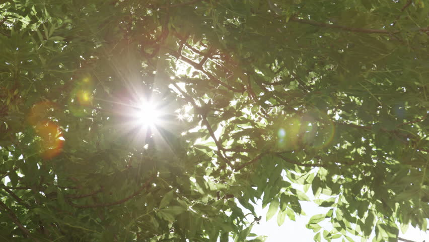 A tree's leaves sway in the wind as the sun sparkles through. At times the sun flares over most of the frame.