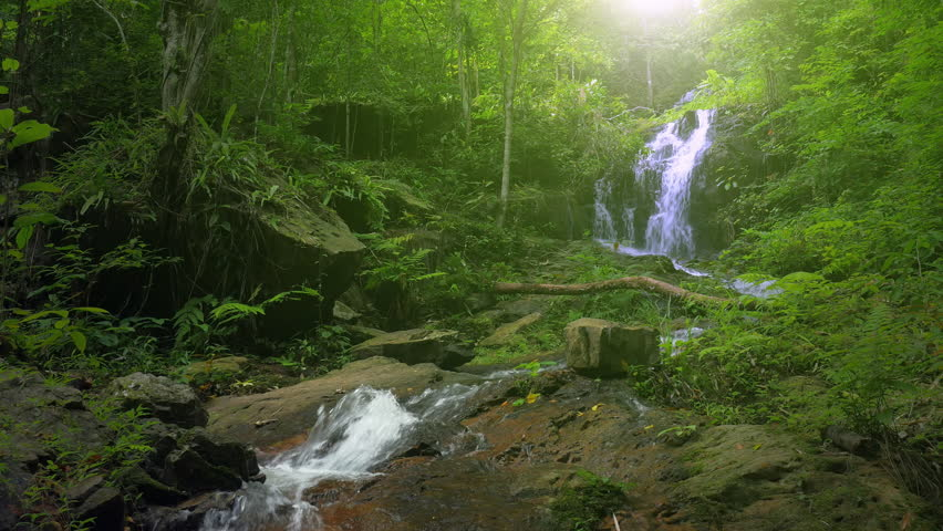 Wilderness of jungle rainforest with tropical green plants and waterfall cascade