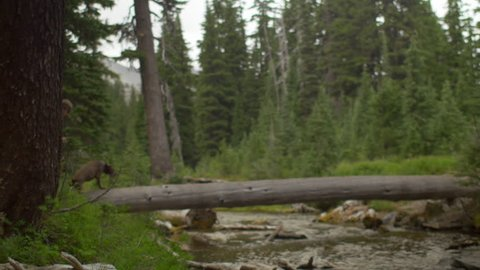Wide shot of hikers using a fallen tree to cross a stream