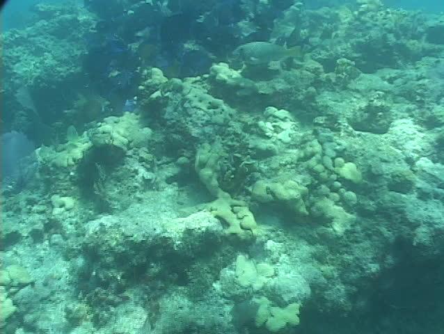 Tropical fish swim around a coral reef near the ocean floor. #1400104