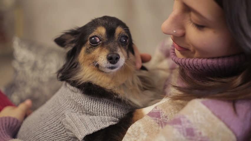 Small dog loves mistress | Shutterstock HD Video #14056574