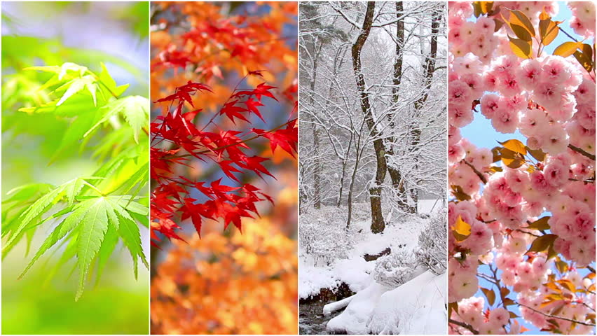 4 seasons nature collage. Several footage at different time of the year. Planet Earth life cycle concept.  | Shutterstock HD Video #14073044
