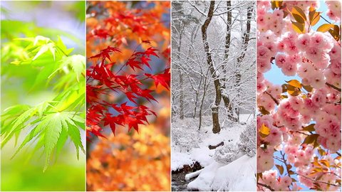 4 seasons nature collage. Several footage at different time of the year. Planet Earth life cycle concept.