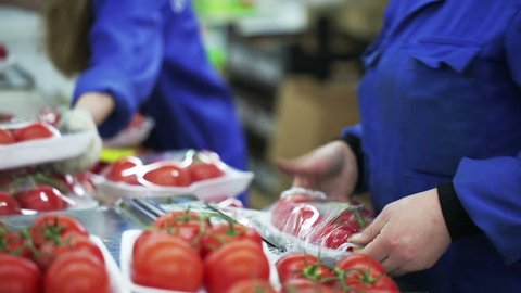 Worker wraps up containers with cling film with tomato. Grocery retailers and distribution. Close up indoors. Companies and providers of healthy food. Trader of retail and wholesale trade