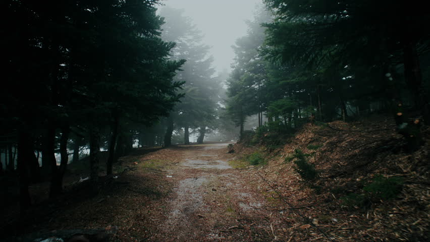 4K Trekking/walking on mountain forest dirt path at winter.4K UHD stabilized/gimbal pov shot of someone walking through a beautiful mountain forest dirt road/path in heavy mist and fog.