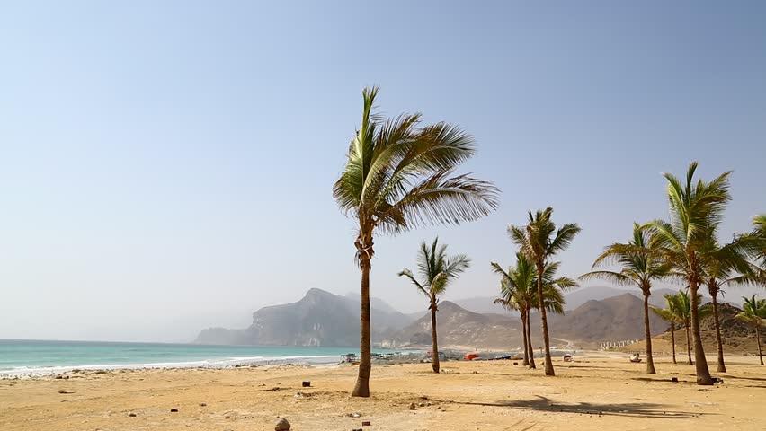 near sandy beach sky  palm   and mountain in oman arabic sea  the hill   #14477512