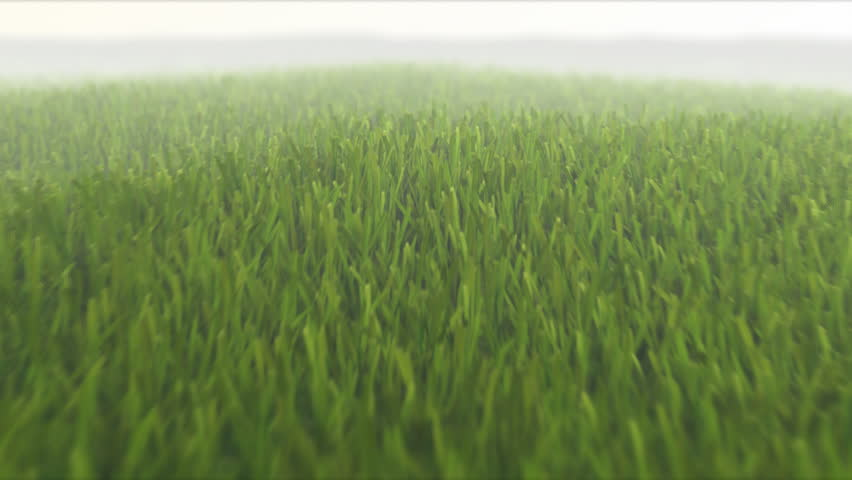 camera flight over fresh spring grass, seamless loop, 3D animation, depth of field, motion blur, HD 1080p TIP: You can speed up 2x or 3x this sequence to achive more impressive effect.