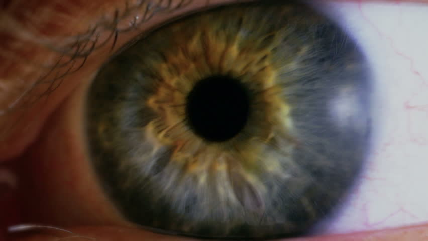 Human eye iris contracting. Close up. #14563354
