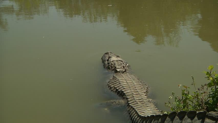 Header of gator