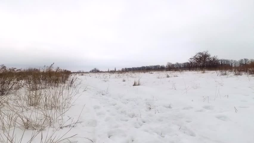 dry grass field background. Dry Plants On A Field Covered With Snow - HD Stock Footage Clip Grass Background