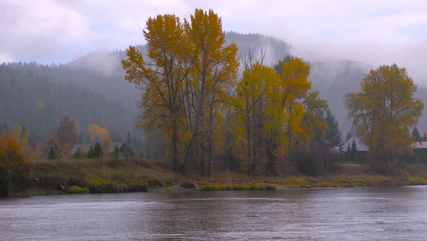 River bank in the mist, autumn forest on the riverside, beautiful trees on a background of mountains. Under rain. Waterfront park. Washington state. Landscape video. 4K, 3840*2160, high bit rate, UHD