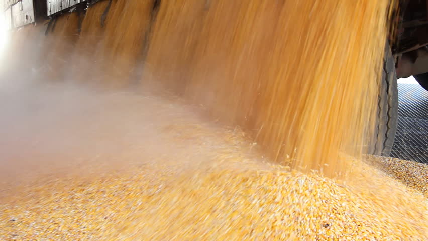 Loading Corn into the Silo