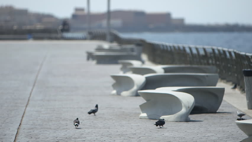 Jeddah Corniche. Rack focus on pidgeons pecking on a promenade, which stretches into the distance by the Red Sea shore.
