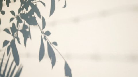 Silhouette shadow of leaves motion by natural wind on white wall