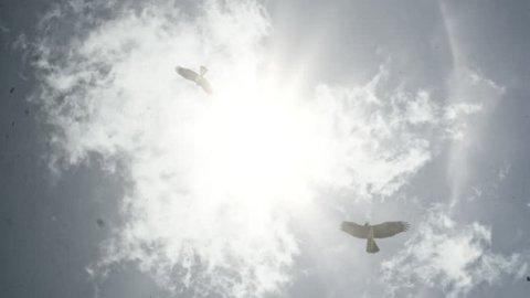 Birds soar high in the sky. Eagle.