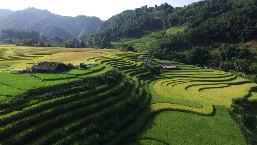 Aerial video in an amazing landscape, with drone, above rice terraces in a beautiful day. #15050014