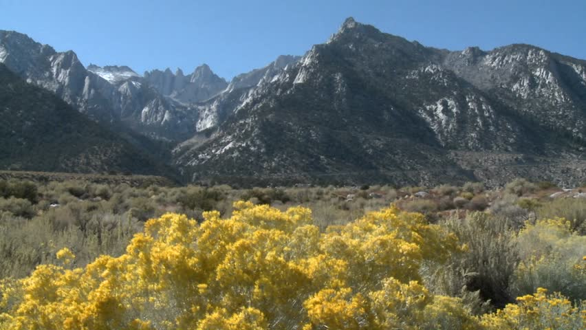 Horizontal pan over wild flowers in the Alabama Hills and the Sierra Nevada Range above Lone Pine, California.   Shutterstock HD Video #1509284