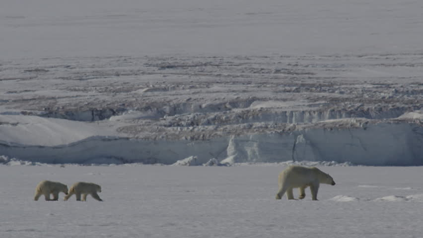 A mother polar bear and her two cubs walk through the shimmering heat waves across the sea ice on a sunny arctic day. A glacier cliff in the background - A006 C063 0712J3 001