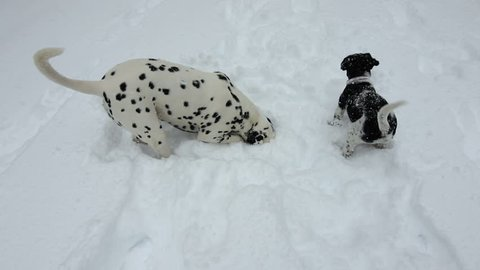 Dalmatian and puppy dog digging in snow having fun