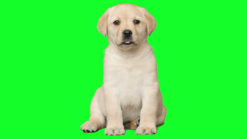 Header of puppy