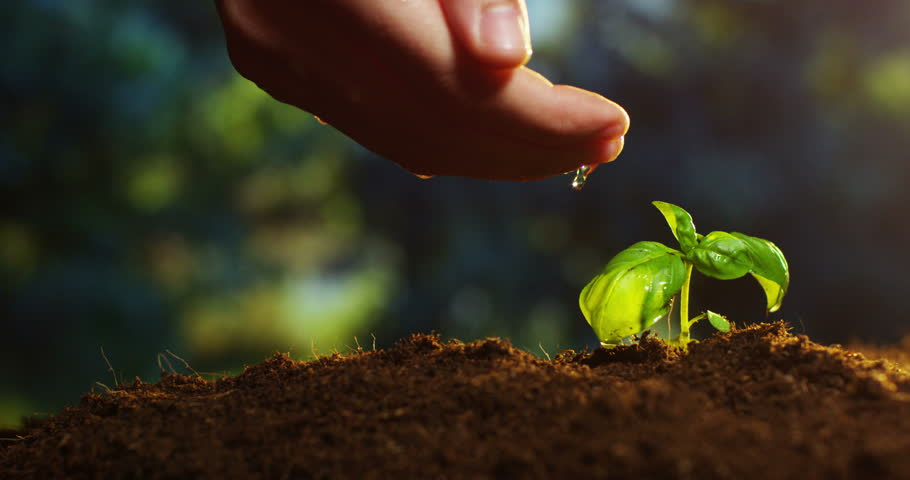 A young beautiful hand watering a plant in a romantic natural and magical atmosphere | Shutterstock HD Video #15711934