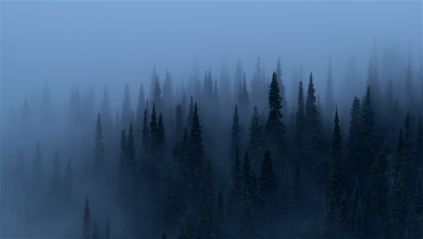 Morning Mist In Forest Mount Stock Footage Video 100 Royalty Free