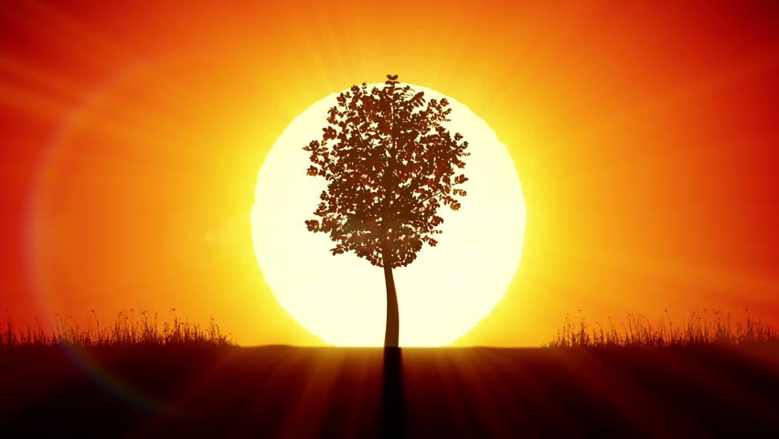Beautiful Sunrise and Growing Tree. Achievement and Progress Concept 3d animation. Rising Sun Gives New Life. HD 1080.  | Shutterstock HD Video #15817774