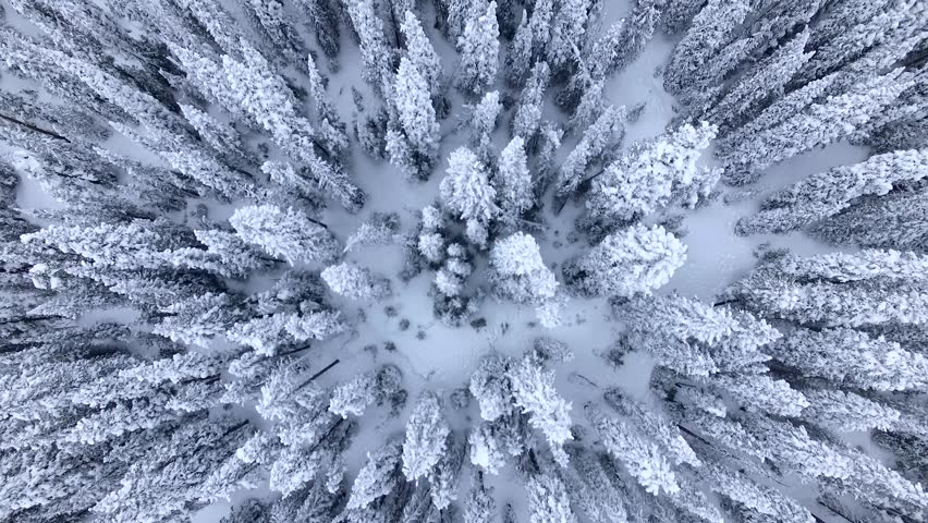 Beautiful Snow-Covered Evergreens. Aerial/Drone Footage of a Blizzard Aftermath near Breckenridge. Colorado Rocky Mountains
