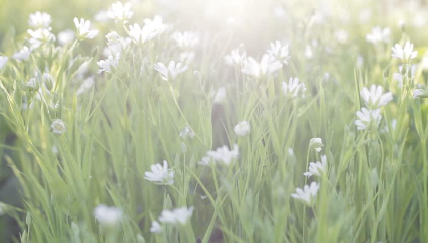 Many Spring Flowers White Spring Stockvideos Filmmaterial 100