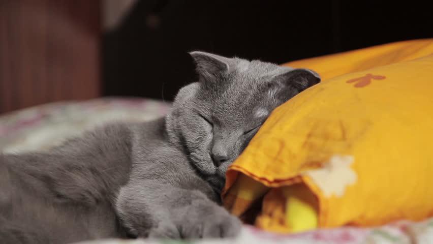 Header of pillow