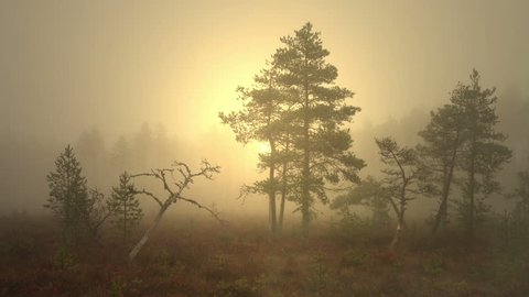 Mist rising from the bog. Foggy marshland in early morning. Actual scene from Finland, but it is characteristic landscape also for Sweden, Norway, Baltic and other countries with bogs, mires and pines