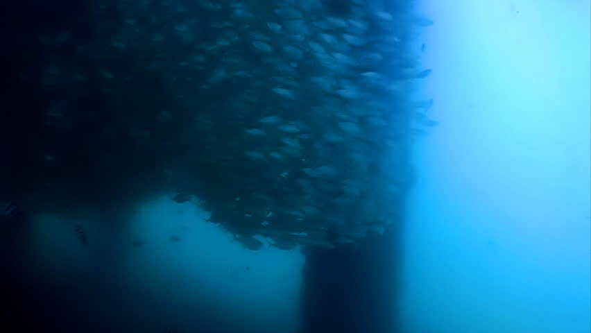 A swarm of fishes swimming in a massive circular formation underneath a jetty