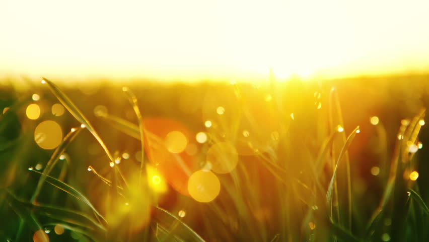 Dolly Motion: Background of Dew Stock Footage