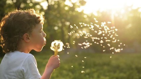 Boy blowing on dandelion beautiful sunset light