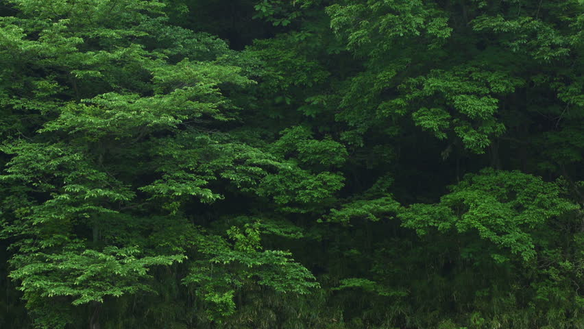 Forest Background | Shutterstock HD Video #16865227