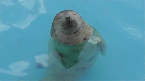 Baby Seal Relaxing In Water