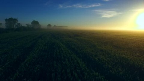 A spectacular sunrise breaks over foggy fields of wheat, aerial view.