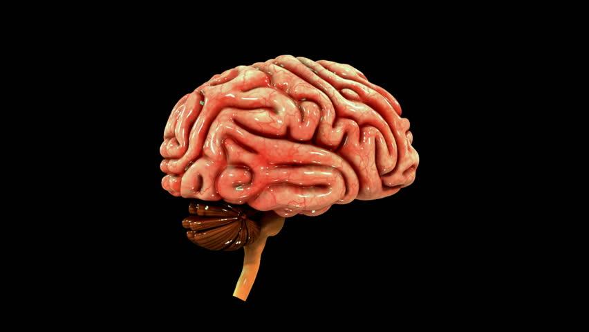 Brain anatomy animation