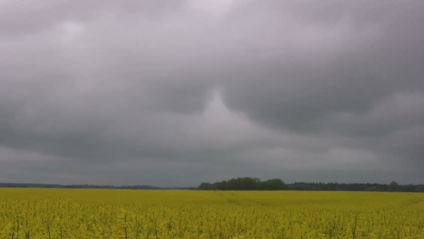 Storm clouds rolling in over farmland with rape-flowers