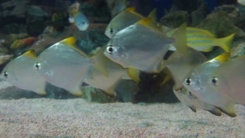 Catfish Swimming Around In The Aquarium Stock Footage Video ...