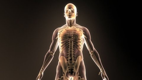 Medical animation. Head X-Ray. Brain neural activity.