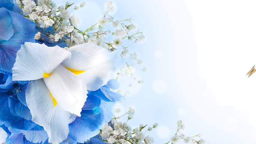 Bouquet of blue irises white flowers and butterfly footage with video multi colored butterfly footage with alpha channel file format mov mightylinksfo Choice Image