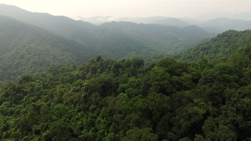 Aerial video above tropical forest in a sunny day | Shutterstock HD Video #17533504